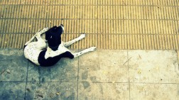 dog perra street streetphotography calle