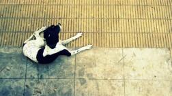 dog perra street streetphotography calle